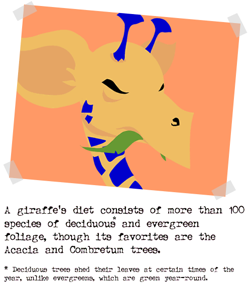 2004-01-05-giraffe04